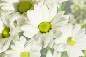 flowers-164860